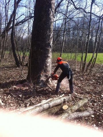 Operazioni di manutenzione boschiva Parco del Ticino