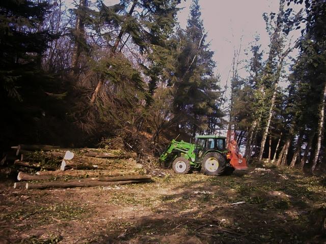 Operazioni di manutenzione boschiva Vergiate (VA)