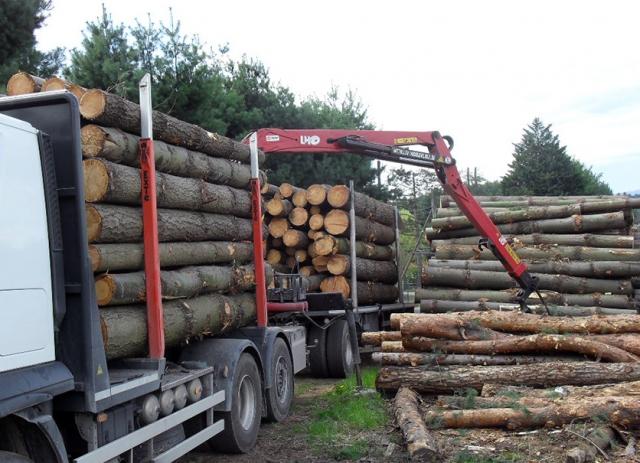Tronchi da opera di qualità e tipo a seconda del bosco tagliato