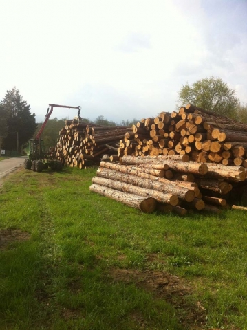 Tronchi da opera, legna da ardere e pali in castagno